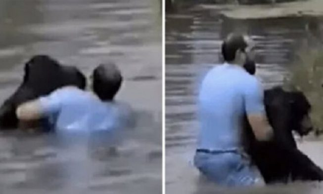Image result for Man dives into zoo enclosure when staff refused to save a helplessly drowning ape
