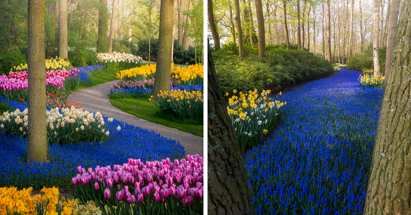 The Most Beautiful Flower Garden In The World Has No -1141