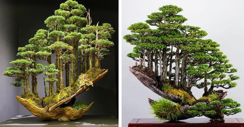 Bonsai Master Masahiko Kimura Creates Gravity Defying Mini Forests Healthylifeboxx